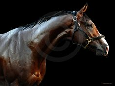 Union Rags...hope he can win the Belmont...go Michael Matz....AND, he did...I knew he could do it!! :)