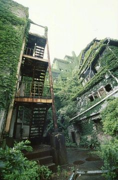 Afurther image of greenery and vegetation invading the urban landscape, taking over abandoned buildings and factories. RCL