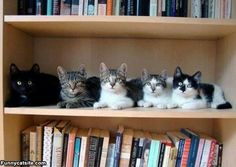 Hmm, which kitty should I pick to read with me today?