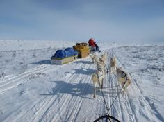 Dog Sled Tours | Arctic Adventure Tours, Inuvik, Canada