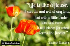 8 Best Flower Quotes Images Quote Life Quotes Of Life Quotes