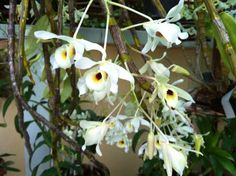 The last of the new orchids from my garden.