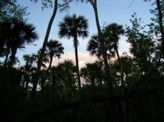 Florida is truly a paradise. We love exploring the Sunshine State through camping, hiking, boating and bicycling. There is more to Florida than...