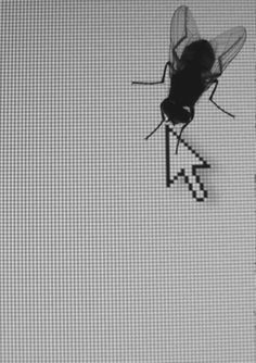 A fly on the monitor