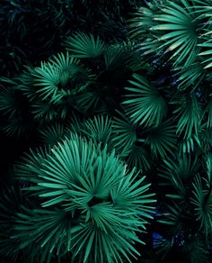color | green - deep green palm fronds