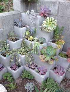 Magical succulent garden from cinder blocks