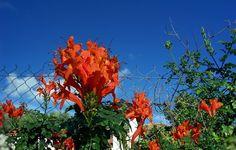 Φωτογραφία - Φωτογραφίες Google Google, Plants, Planters, Plant, Planting