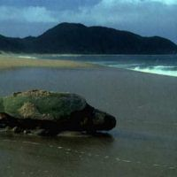 Eritrea says sea turtle conservation, coastal protection is paying off | Africa Times