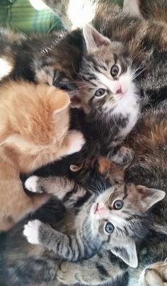My friend's very photogenic kittens!
