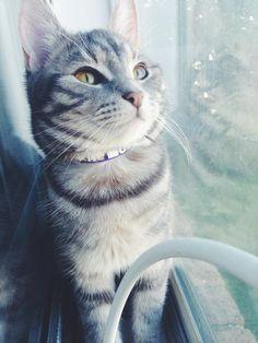 my adorable kitten marble :)