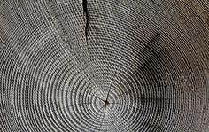 Holz, Jahresringe, Maserung