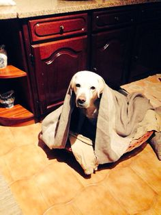Amélie a nossa cadelinha