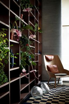 A bookcase full of Medinilla manificas is alright by me!  desire to inspire - desiretoinspire.net