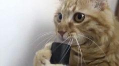 cat_vs_vacuum_cleaner-44214