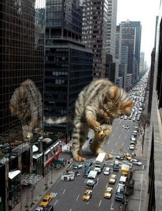 Godzilla cat