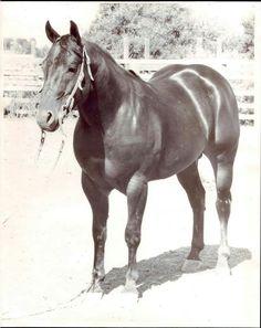"""Poco Tivio   """" Quarter Horse Great """""""
