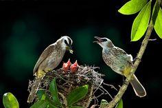 cute-bird-parents-221__700