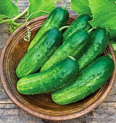 Cucumbers are very easy to grow and make for a delicious treat. But did you know they can prevent hangovers, or clean the kitchen sink? Belo...