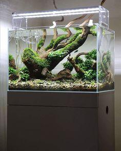 Very cool scape ------------------------------------------------ #aquascape #aquarium #aqua #aquascaping #wood #grass #tetra #fish #fishtank #tropical #tropicalfish #nature #scenery #water #fresh #aquariumsofinstagram #aquaria #beautiful #awesome #plants #aquariums #instafish #naturalaquariums #beautiful #aquariumsdaily