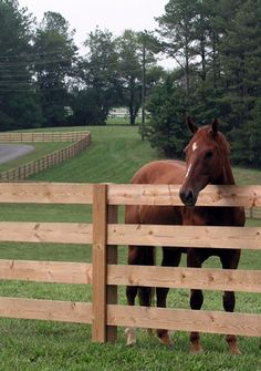 such a sweetie pie!!!!!!! Love love love....  I have to have this horse and fence !!!