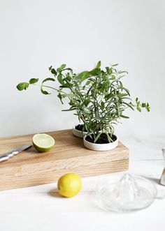Learn how to make a cutting board with a little extra flair, with this DIY tutorial. This DIY Cutting Board and Herb Planter is both chic and practical. To start, having a homemade cutting board is a great kitchen idea. Small Space Living, Small Spaces, Cooking With Fresh Herbs, Diy Gifts Cheap, Herb Planters, Herb Pots, Diy Cutting Board, Home Hacks, Diy Kitchen