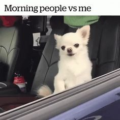 Morning People Vs Me Dogs GIF - MorningPeopleVsMe Dogs Cute - Discover & Share GIFs Funny Pictures With Captions, Funny Animal Pictures, Cute Funny Animals, Funny Cute, Funny Dogs, Super Funny, Funny Chihuahua, Funniest Pictures, Hilarious Pictures