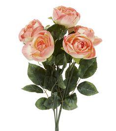 Spring Floral Rose Bush Peach