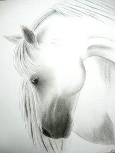 "Original Horse Sketch - ""Basking in the Sun""  - Charcoal 11""x14"" on Etsy, $39.00"