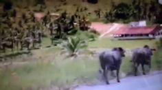 Carreta que transportava gado pega fogo na BR-101, os animais morreram q...