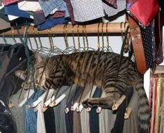 silly kitty on metal coat hangers hanging in closet