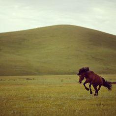 Un caballo salvaje está siendo domado para participar en carreras en un área de pastizales localizados a 70 kilometros de la capital de Mongolia, Ulan Bator. Foto: Reuters