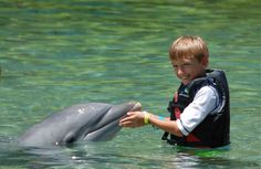Children love playing with the dolphins at Dolphin Quest!