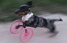 A Nova Vida de um Cão Graças a Impressão 3D