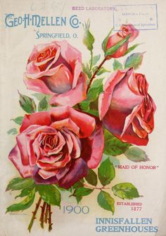 cover of Geo H. Mellen Co 1900 catalogue with an illustration of 'Maid of Honor' roses. Geo H. Mellen Co. Department of Agriculture, National Agricultural Art Vintage, Vintage Paper, Vintage Flowers, Vintage Images, Vintage Prints, Seed Illustration, Floral Illustrations, Vintage Labels, Vintage Postcards
