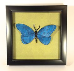 Beaded Morpho Blue Butterfly Shadowbox Specimen by AuroraRosealis, $59 Made with beads, wire, gel medium, pearl powder, and lace, permanently mounted on paper in a shadowbox, behind glass. Now available at Oddyssea in Half Moon Bay, CA