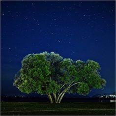 Patrik Svedberg Captured The Same Broccoli Tree For 2 Years