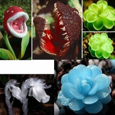Flower pots planters Succulent Cacyus seeds lotus Lithops Pseudotruncatella Bonsai plants Seeds 100pcs  Free Shipping IZ0031-in Bonsai from Home & Garden on Aliexpress.com | Alibaba Group