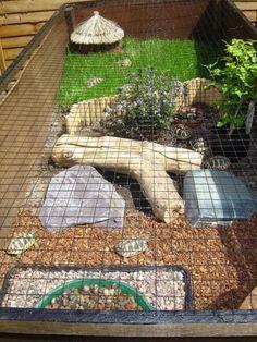 Schildkrötenbau Tortoise Outdoor Enclosure Information Page 7 Reptile Forums reptiles Enclosure Forums Information Outdoor Page Reptile reptile terrarium ideas Schildkrötenbau Tortoise Tortoise Run, Tortoise House, Tortoise Habitat, Sulcata Tortoise, Tortoise Turtle, Turtle Cage, Turtle Pond, Pet Turtle, Turtle Enclosure