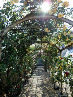 Botanical garden, Pavia