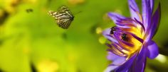 Butterfly and Bees by EDEMIN RAMIREZ viewfinder image production on 500px