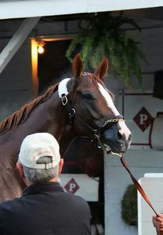 California Chrome, winner of the 2014 Kentucky Derby ! Out of a no name mare  and no name sire, a dark horse won the Kentucky Derby!  (What I wouldn't give if he ever went to New Vocations!)