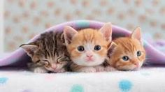 People use to share their dreams about kittens.Dream of kittens is mostly…