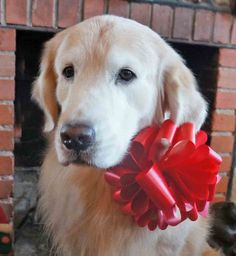 I'll take this present.....Jack is the perfect gift.
