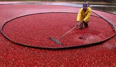 Famous sweets made in Massachusetts  Ocean Spray Cranberries  Started by three cranberry growers in 1930, Ocean Spray Cranberries now has about 600 grower families across North America and is still based in Lakeville.