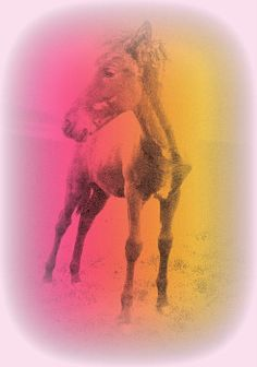 A Horse Baby My Horse, Horses, Framed Prints, Canvas Prints, Centaur, Mother And Father, Famous Artists, Art Pieces, Elephant