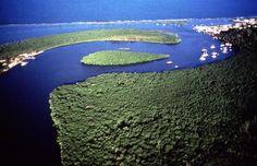 """Brasil 12 Costa del Descubrimiento - Reservas de bosque atlí¡ntico estí¡n situadas entre los Estados de Bahía y Espirito Santo. Son ocho zonas protegidas, separadas entre sí, que suman 112.000 hectí¡reas de bosque atlí¡ntico y arbustos asociados (""""restingas"""")."""