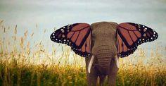 #elefantemariposa