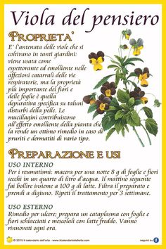 Viola del pensiero Natural Life, Natural Health, Lisa Green, Italian Food Restaurant, Magic Herbs, In Natura, Medicinal Herbs, Vegan Lifestyle, Herbal Medicine