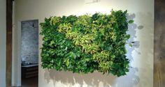 Vegetační stěna v interiéru čistí vzduch a pomáhá proti stresu | Elegantní bydlení