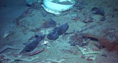 Haunting pictures of boots and a coat at Titanic wreck site illustrate the human cost of the tragedy 100 years after ship sank Rms Titanic, Titanic Wreck, Titanic History, Ancient History, Titanic Sinking, Titanic Photos, Titanic Boat, Titanic Movie, Belfast